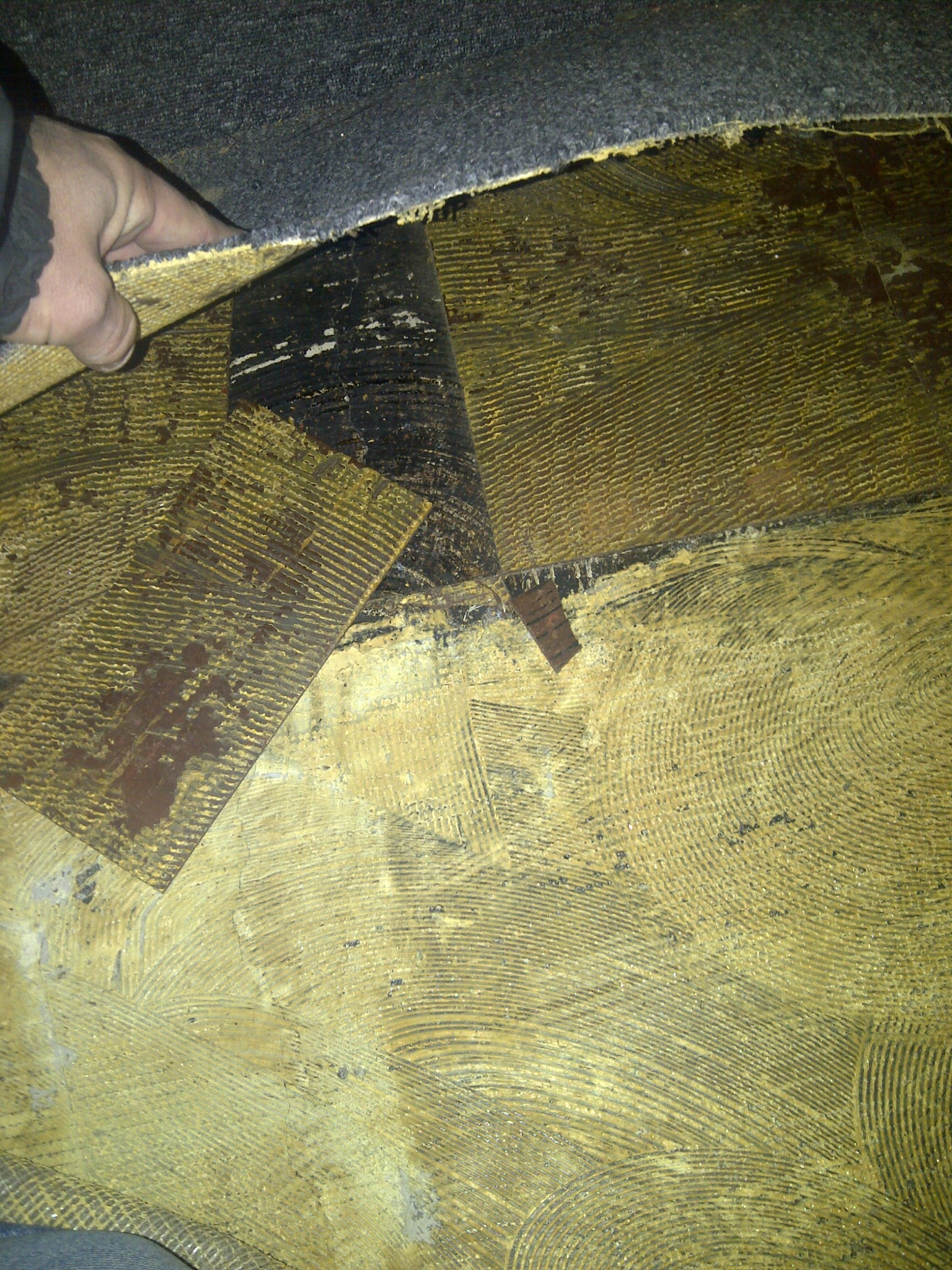 Forum on this topic: How to Identify Black Mold, how-to-identify-black-mold/